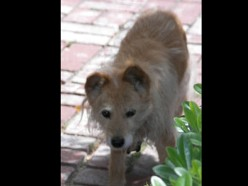pet psychic missing dog pet communicator